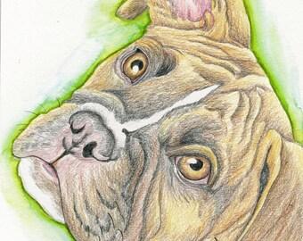 Boxer Original Pencil Painting Drawing Pet Dog Art-Carla Smale