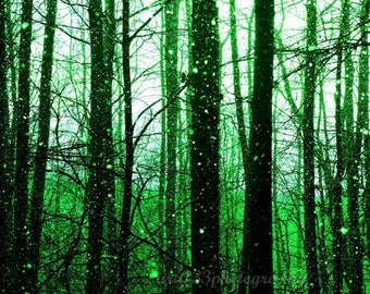 Emerald Green Forest Wall Art Nature Winter Holiday Snow Photograph Black Winter Trees 5x7 inch Fine Art Photography Print Emerald Forest