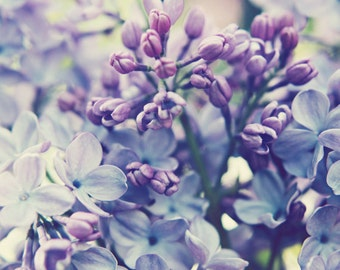 Botanical photography print pale purple lavender lilac flowers bedroom wall art - Scent of Lilac