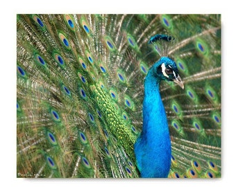 Peacock Print  Peacock Photograph Affordable Art Peacock Blue Green Nature Woodland Forest Tribal Bird Lovely Aqua Turquoise
