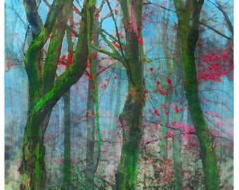 Blue autumn, 8x10inches, art, photography, nature, Fall decor, tree art, Signore, forest, red leaves, blue art