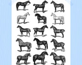 Printable 8 x 10 Horses Print Equestrian Style Horse Breeds Nursery Print Nursery Art Farm Print Barnyard Animal Print Ponies Black White