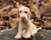 Needle Felted Soft Sculpture Dog Yellow Labrador Retriever Wool