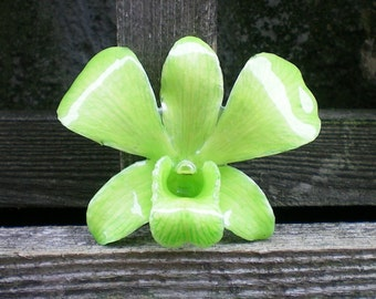 Free Shipping REAL Natural Light Green ORCHID in Poly Resin Pin and Pendant