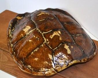 Rustic Decor Turtle Shell Specimen