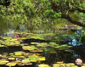 Lily Pond fine art photograph