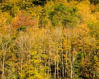 Autumn Photo Fall Colors Fall Forest Print Trees Yellow Leaves Autumn Landscape Red Gold nat82