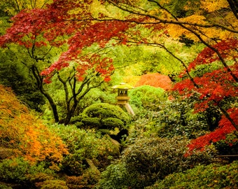Autumn Photography Fall Colors Photo Japanese Shrine Red Maple Autumn Colors Garden Photograph Red Leaves nat93