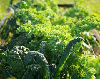 Vates Kale Seeds