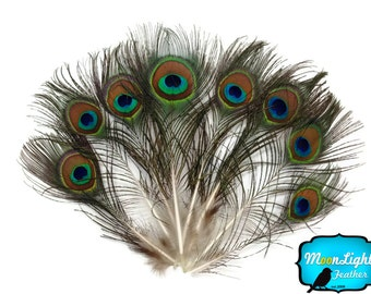 Peacock Feathers, 10 Pieces - MINI Natural Peacock Tail Body feathers : 110