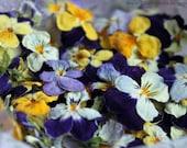 Dry Flowers, Dried Violas, Edible Flowers, Wedding, Cake Decoration, Violas, Lavender, Ivory Violas, Real, Blue, Cupcake Topper, Real, Petal