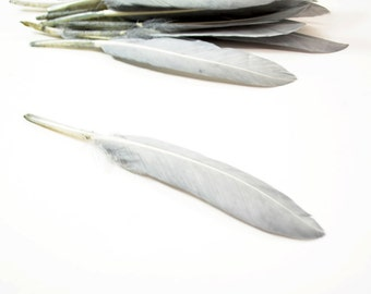 Middling Duck Quills, Stiff loose feathers - Grey (20pcs)