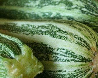 Zucchini, Cocozelle Zucchini Squash