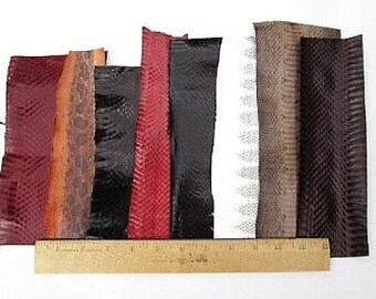 Snake Skin Snakeskin Pieces, Grab Bag- Assorted Colors, 72 inches