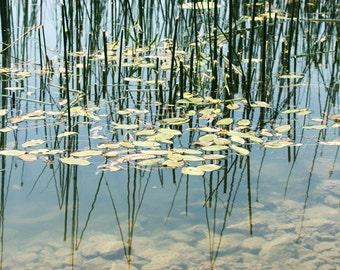 printable art Digital download Surreal photography Lily pad Water lily reflection Nature photography Abstract textural lake photo