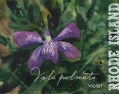 Rhode Island, Watercolor ACEO, State Flowers, Violet, Viola Palmata