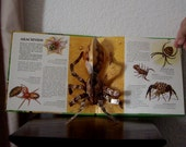 Pop Up Book, GRUESOME LAND CREATURES, Dare to Find Out About- 1993