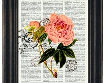 BOGO SALE Pink Peony Flower and Post Card French Upcycled Art Print on Vintage Dictionary Book Page