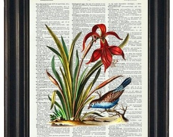 Botanical Print BOGO SALE Dictionary Art Print Wall Decor Bathroom Print on Dictionary Page Blue Bird with Red Flower