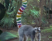 Rainbow Lemur Greeting Card, LGBT, Gay Pride, Blank, 5x7 Card
