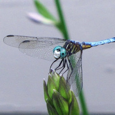 dragonfly57
