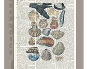 Vintage book print - Beautiful oyster shells  -ARTWORK  printed on Repurposed Vintage Dictionary page 8x11 -Upcycled Book Print
