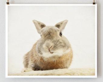 Rabbit photo, bunny photo print, easter rabbit, zen art, animal portrait, nursery room decor, wildlife picture