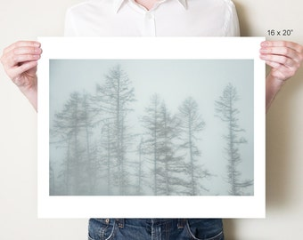 Forest photography, winter landscape woodland photograph. Misty larch trees, England. Monochromatic forest print. Small / large format sizes