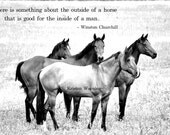 Horse Photos, Horses, Herd, Black and White, Equines, Thoroughbreds, Quotes