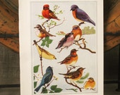 Antique Book Plate Spring in Birdland - Paper Ephemera