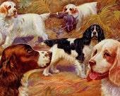 English Springer Spaniel and Clumber Spaniel Dog Print, Edward Herbert Miner, 1930s Vintage, Wall Decor
