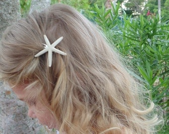 Real Starfish Hair Clip, Nautical Photo Prop,  3 CLIPS