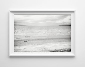Dog on Beach Black and White Landscape Print - Minimalist Art, Beach Home Decor, Seattle Art - Small and Large Wall Art Prints Available