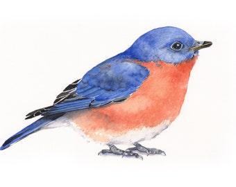 Bluebird Watercolor Painting - bird print of watercolor painting A4  print wall art print - bird art - art print - wildlife print