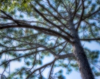 wall art, home decor, Dreamy, Romantic, Tree, Pine Tree, Clouds, Blue Sky, Branches, Pine Needles, - Kaleidoscope