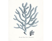 Coastal Decor Branched Finger Sea Coral Giclee Art Print 8x10 French Blue