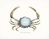 Coastal Decor Antique French Crab Natural History Giclee Art Print 10 x 8 -Ocean Blue