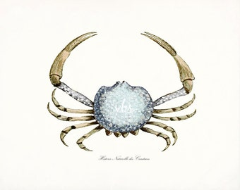 Coastal Decor Antique French Crab Natural History Giclee Art Print 10 x 8 -Ocean Blue