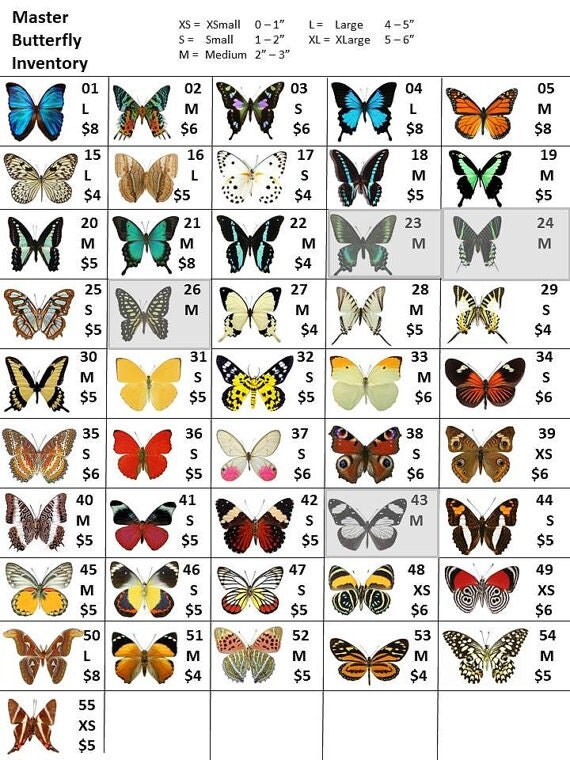 Listing for spread butterfly