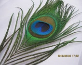 """100pcs/lot Peacock tail  feathers 10-12"""" for Wedding Party Event Christmas Decoration"""