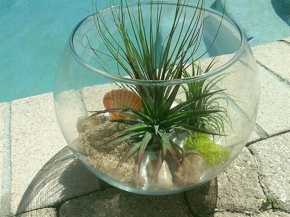 Large custom fishbowl air plant terrarium air plants fish for Fish bowl plants