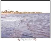ocean seagull shore line beach - fine art photography print