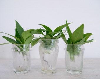 vintage mismatched glass jar trio with vertical lines