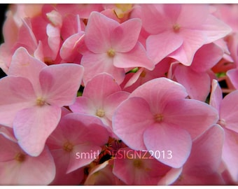 Hydrangea Photography, Floral Photography, Pink Hydrangea, Macro Flower Photo, Nature Photography, Home Decor, Wall Art, by Abby Smith