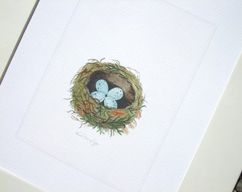 Bird Nest with Pale Blue Speckled Eggs Naturalist  Drawing Archival Quality Print