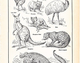 Vintage prints of Australian plants, animals, and native handiwork, three pages from a 1920's dictionary