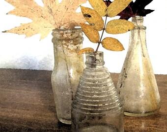 Original Photograph Vintage Bottle Trio with Leaves