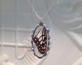Real Butterfly Wing Pendant  - Blue Glassy Tiger Butterfly - Hand Soldered - Great Springtime Gift and birthday gift