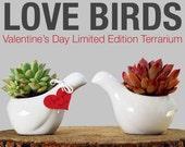 Valentine's Day Gift- Love Birds Terrarium
