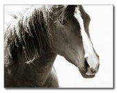 Friends Simple Black and White Close up Horse Note Card